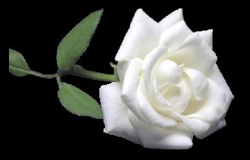 авторское стихотворение Александра Харина Благодарю за любовь