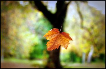 Авторское стихотворение листок осень